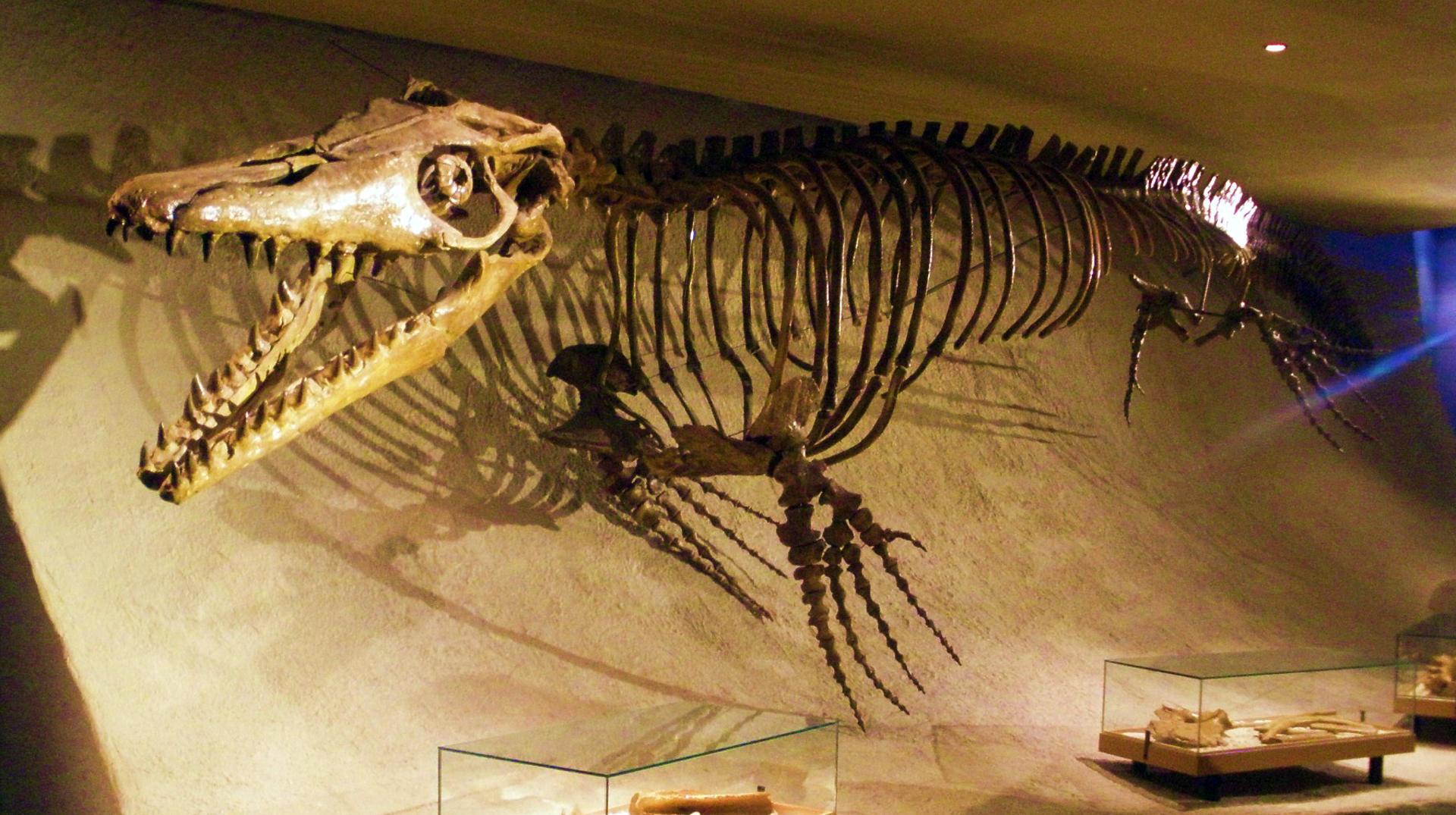 Мозазавр - гигантский доисторический ящер