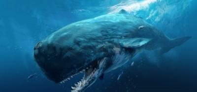 краткая информация о китах
