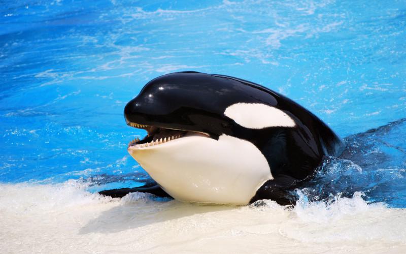 шутки кит никитос | Забавные факты, Веселые мемы, Шутки | 500x800